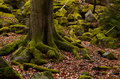 Tree And Stones Covered By Moss Royalty Free Stock Photo - 69593335
