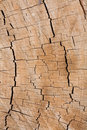 Tree Rings Royalty Free Stock Images - 6965279