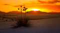 White Sands National Monument Sunset, New Mexico - Timelapse Stock Images - 69625334