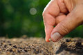 Planting Seed Royalty Free Stock Photo - 69706145