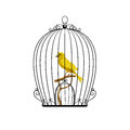 Yellow Bird In A Black Cage Stock Photo - 69729360