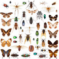 Set Of Insects Royalty Free Stock Images - 69764889