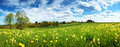Field With Dandelions And Blue Sky Royalty Free Stock Images - 69772599
