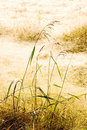 Dry Grass Field Stock Photography - 6985892