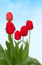 Red Tulips Royalty Free Stock Image - 69867286
