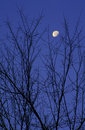 Moon Framed By Tree Branches Royalty Free Stock Photo - 700235