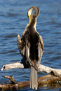 Darter Stock Images - 701674