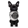 Hungry Dog With Bowl Stock Photos - 70005213