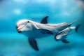 Dolphin Mother And Calf Underwater Looking At You Stock Photo - 70009310
