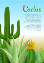 Cacti And Succulents Poster. Stock Image - 70015391