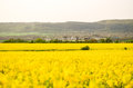 Spring Field, Landscape Of Yellow Flowers, Ripe Stock Photography - 70022212