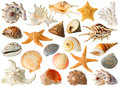 Collection Of  Sea Shells Royalty Free Stock Photos - 70025908