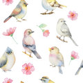 Birds And Spring Flowers Watercolor Seamless Pattern. Stock Image - 70080651