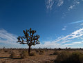 Joshua Tree Cloudscape In Southern California High Desert Royalty Free Stock Image - 70170656
