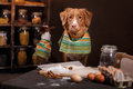 Dog Breed Jack Russell Terrier And Dog Nova Scotia Duck Tolling Retriever , Foods Are On The Table In The Kitchen Royalty Free Stock Photo - 70269155