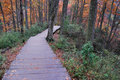 Wood Path  Stock Photography - 7032652