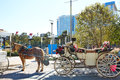 Houston Discovery Green Park Horse Carriages Stock Image - 70330221