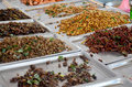 Exotic Food Fried Insect Royalty Free Stock Photo - 70342355