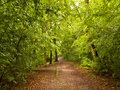 Shady Summer Forest Hiking Trail After Rain Stock Photo - 70392900