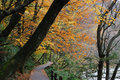 Autumn Color Royalty Free Stock Image - 7042096