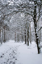 Winter Landscape - Path In Snowy Forest Royalty Free Stock Image - 7042956
