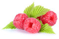 Raspberry Fresh Raspberries Berry Berries Fruit With Leaves Isol Stock Photography - 70496702