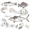 Vector Hand Drawn Seafood Set - Shrimp, Crab, Lobster, Salmon, Oysters, Mussel, Tuna, Trout, Carp. Mediterranean Cuisine Royalty Free Stock Images - 70596969