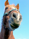 Horse Close-up Stock Photos - 7062343