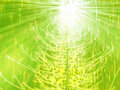 Sparkly Christmas Tree Illustration Royalty Free Stock Photography - 7069737