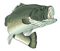 Big Mouth Bass Royalty Free Stock Photography - 70625517