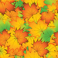 Seamless Pattern From Bright Autumn Maple Leaves - Vector Illustration Stock Photography - 70653452