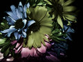 Dark Flower Background Stock Photos - 70658233