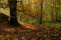 Autumn In The Woods Royalty Free Stock Photos - 70672378