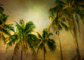 Palms Warm Texture Royalty Free Stock Photography - 70710817