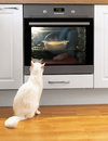 White Cat Is Watching Food. Stock Photos - 70729333