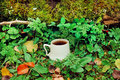 Cup Of Morning Coffee In Green Forest With Moss On The Ground And Leaves Stock Photo - 70793430