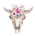 Watercolor Bohemian Cow Skull.  Western Mammals. Watercolour Hip Stock Photography - 70841112