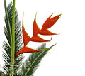 Heliconia Flowers And Palm Leaf Stock Photos - 70843593