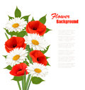 Nature Flower Background With Red Poppies And White Daisies. Stock Photos - 70861013