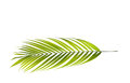 Leaf Of Palm Tree Stock Images - 70945084