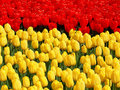 Red And Yellow. Royalty Free Stock Photo - 70982325