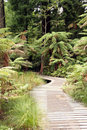 Forest Boardwalk Royalty Free Stock Image - 716896