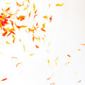 Orange Petals Background Royalty Free Stock Image - 7103176