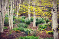 White Birch Tree Forest, Spring Flowers Stock Photography - 71018802