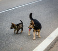 Dogs Playing On Street Royalty Free Stock Photo - 71084005