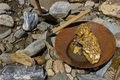 Gold Nugget Mining From The River. Gold Suchen Royalty Free Stock Photo - 71136995