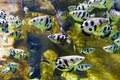 Tropical Fish Stock Image - 71195821