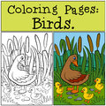 Coloring Pages: Birds. Mother Duck With Her Little Cute Duckling. Stock Image - 71205911