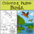 Coloring Pages: Birds. Two Little Cute Ducks. Royalty Free Stock Image - 71205926