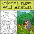 Coloring Pages: Wild Animals. Little Cute Hedgehog . Royalty Free Stock Photography - 71205997